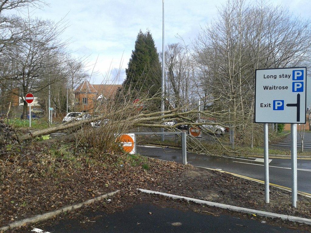 tree storm katie