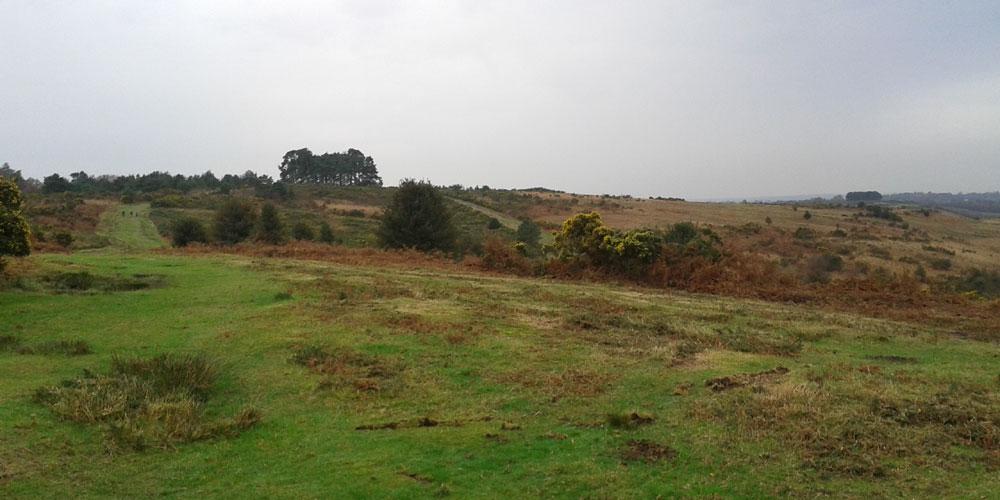 Ashdown-Forest-Clump
