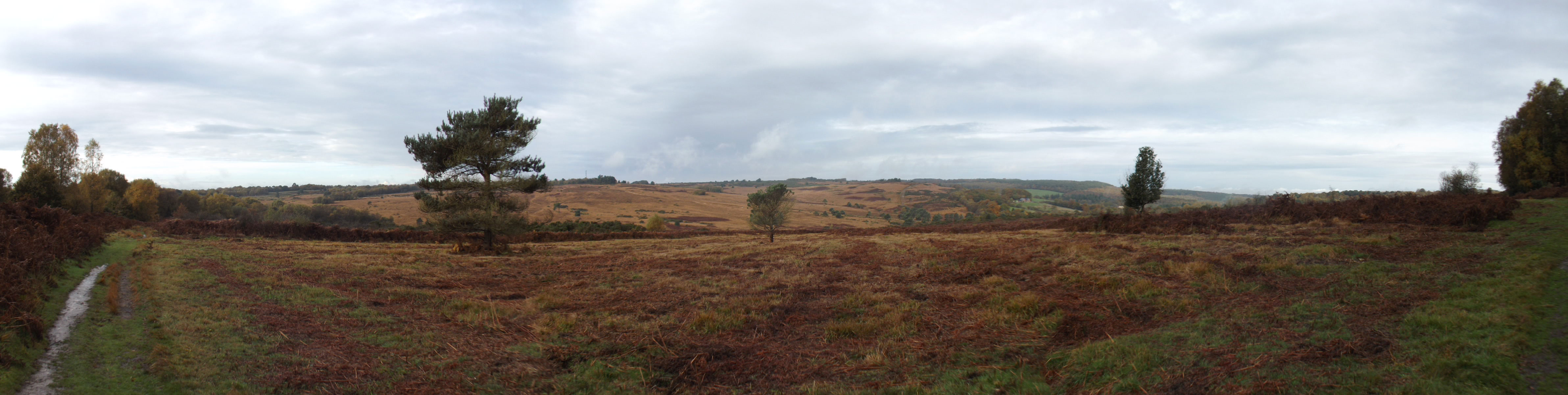 Ashdown-Forest-Panorama