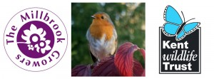 Garden Bird Care @ Millbrook Garden Centre | Crowborough | United Kingdom
