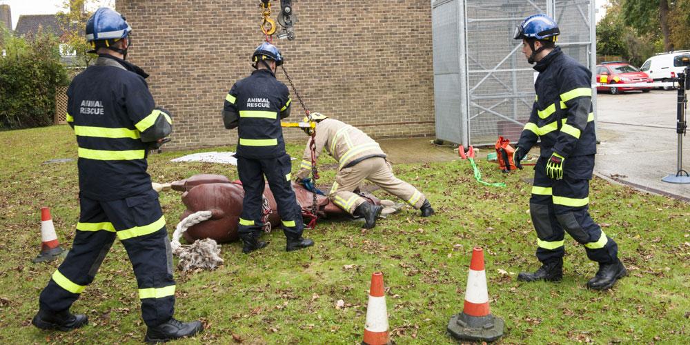 large animal rescue crowborough fire service