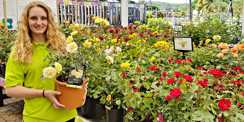 Millbrook Garden Centre, in Crowborough, is hosting its annual Rose Festival from Friday 16th June to Friday 30th June.