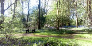 Bluebell Wood in Crowborough