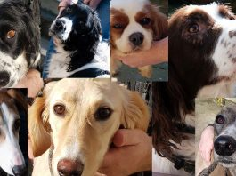 Sussex Police suspected stolen dogs reunite owners